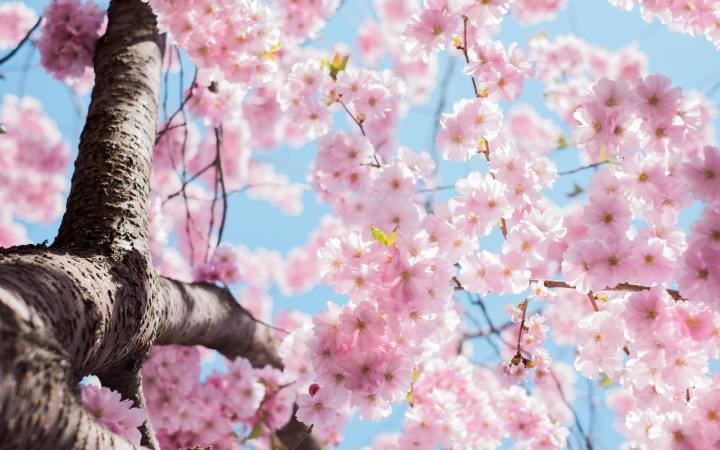 8 Things I Love AboutSpring